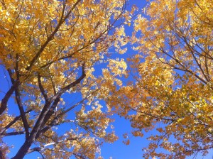 New Mexico Leaves